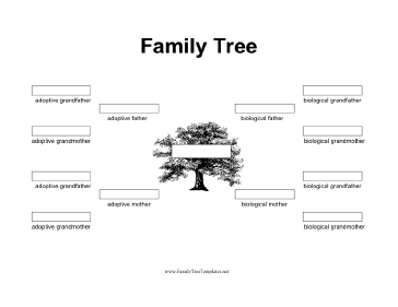 family tree with biological and adoptive parents